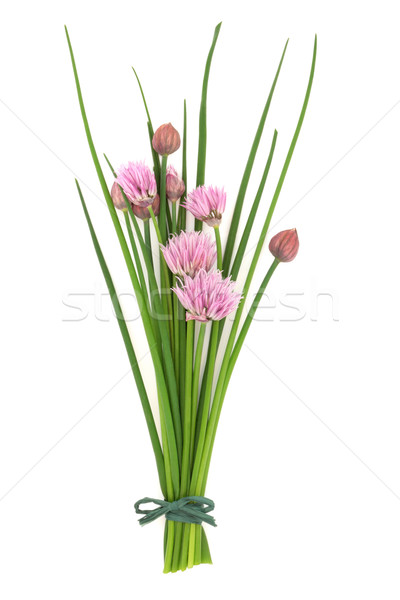 Chives Herb Flower Posy Stock photo © marilyna