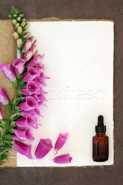 Foxglove Herbal Medicine Stock photo © marilyna