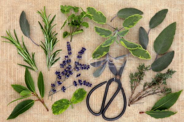 Kitchen Herbs Stock photo © marilyna