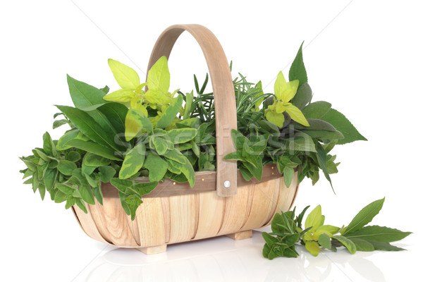 Herb Leaf Selection Stock photo © marilyna