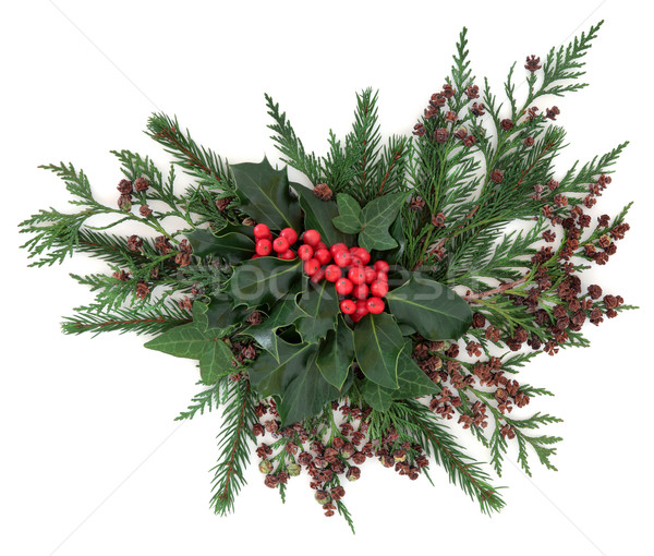 Inverno flora natal vermelho hera Foto stock © marilyna
