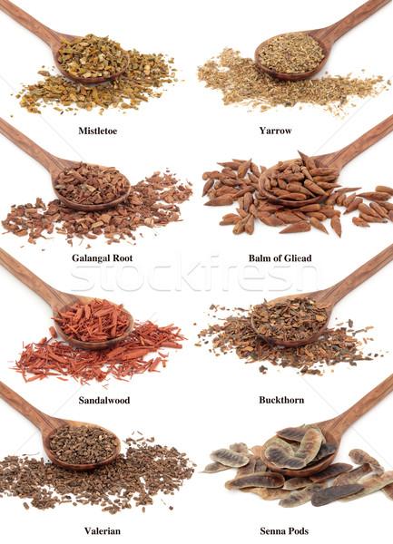 Természetes szárított növénygyűjtemény gyógyászati gyógynövény olajbogyó fa Stock fotó © marilyna