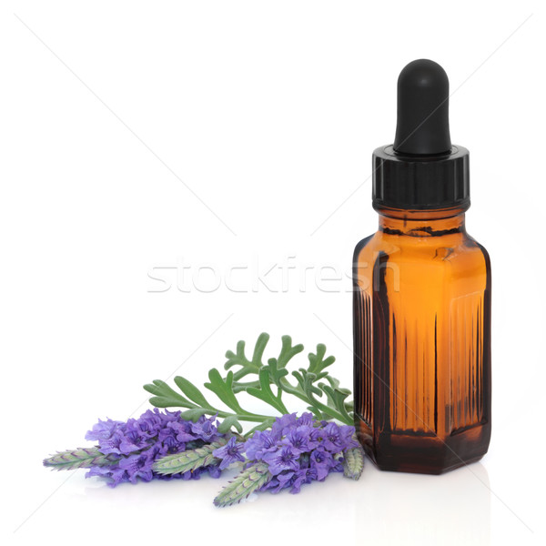 Lavender Herb Flower Essence Stock photo © marilyna