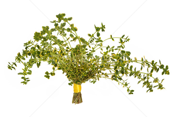 Thyme Herb Leaves Stock photo © marilyna