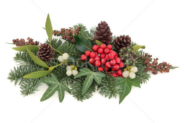 Tradicional invierno flora Navidad muérdago rojo Foto stock © marilyna