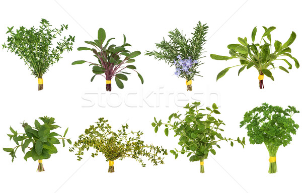 Photo stock: Herbe · feuille · origan · romarin · citron · baume