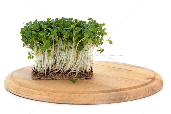 Mustard and Cress Stock photo © marilyna