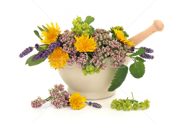 Herb Flower Selection Stock photo © marilyna