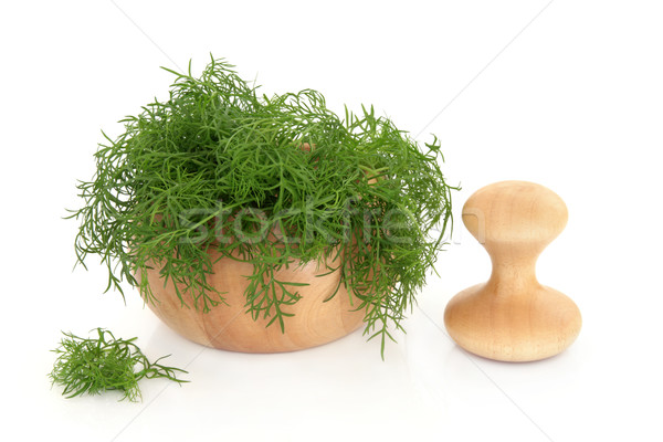 Fennel Herb Stock photo © marilyna