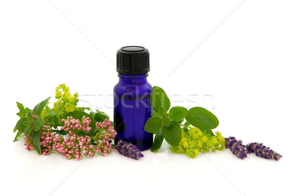 Alternatief therapie lavendel dames bloem blad Stockfoto © marilyna