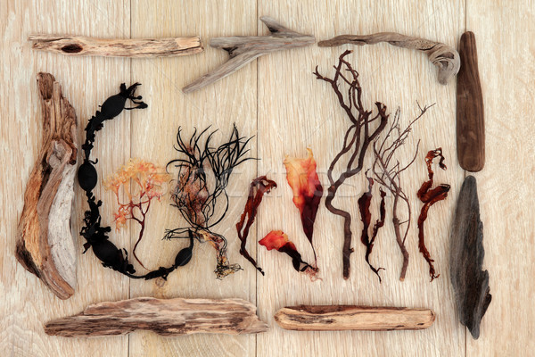Wodorost driftwood streszczenie projektu starych dąb Zdjęcia stock © marilyna