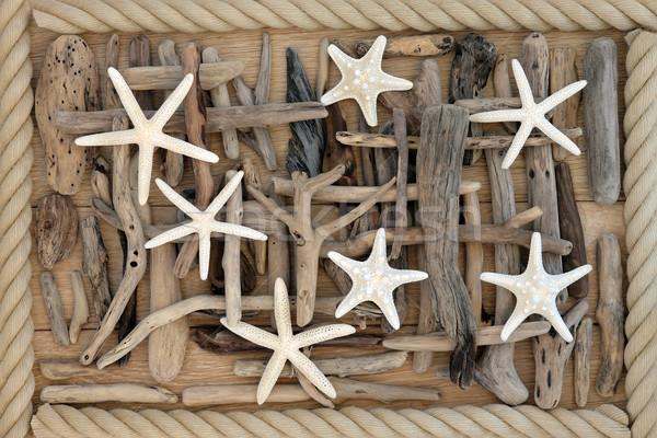 Rozgwiazda driftwood morza muszle streszczenie dąb Zdjęcia stock © marilyna