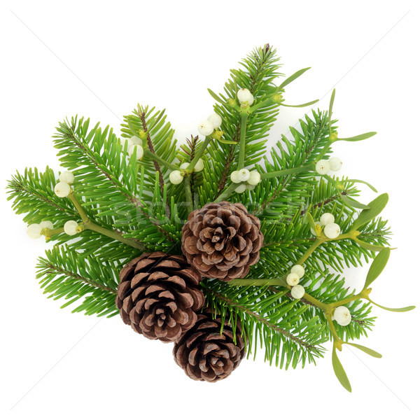 Pine Cones Fir and Mistletoe  Stock photo © marilyna
