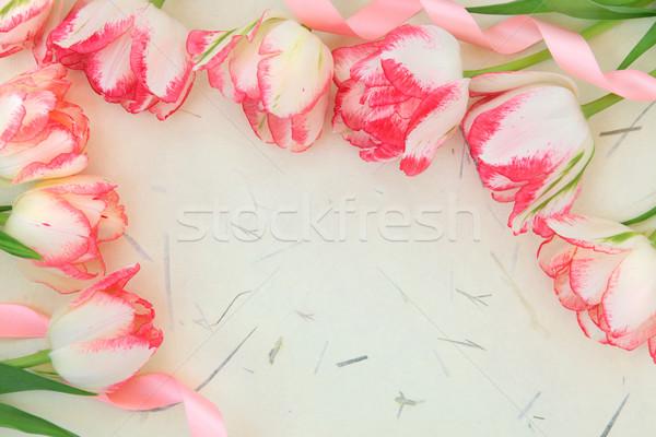 Tulip Flower Border Stock photo © marilyna