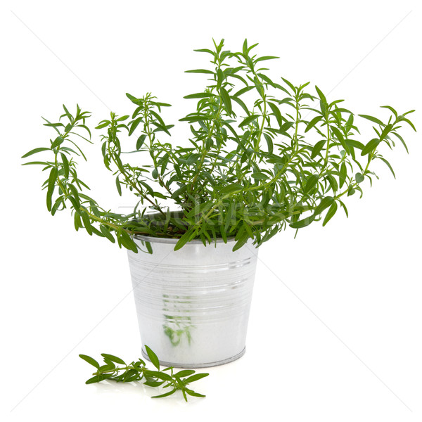 Hyssop Herb Plant Stock photo © marilyna