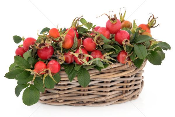 Rose Hip Fruit Stock photo © marilyna