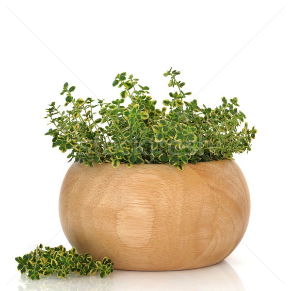 Thyme Herb Stock photo © marilyna
