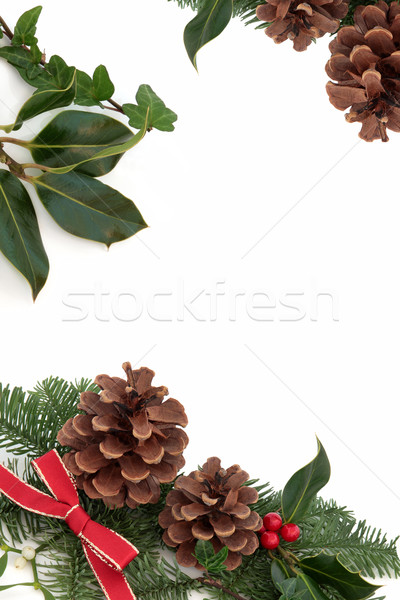 Foto d'archivio: Natale · confine · decorativo · ivy · vischio · pino