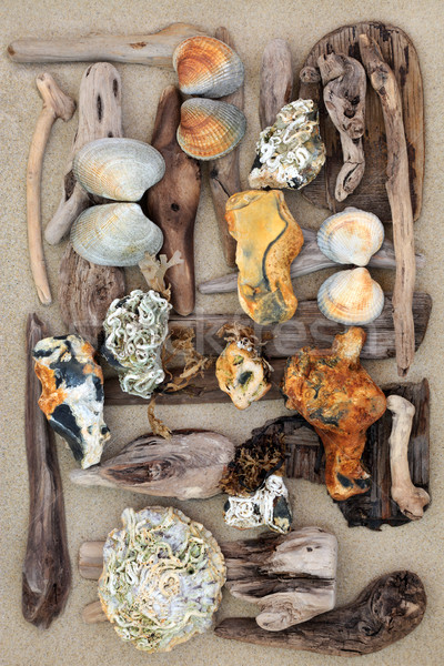 Driftwood Seashells and Rock Abstract  Stock photo © marilyna