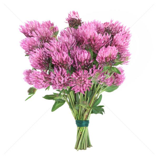 Rood klaver kruid bloemen bloem bos Stockfoto © marilyna