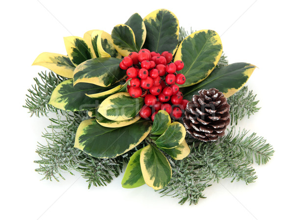 Variegated Holly Decoration Stock photo © marilyna