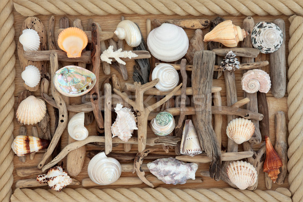 Troncos mar concha abstrato carvalho madeira Foto stock © marilyna