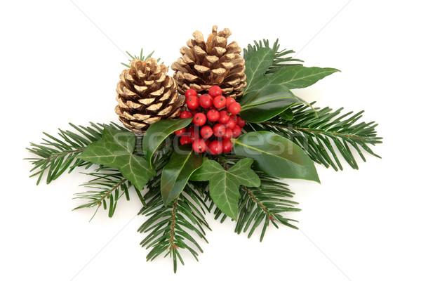 Winter Holly Berry Decoration Stock photo © marilyna
