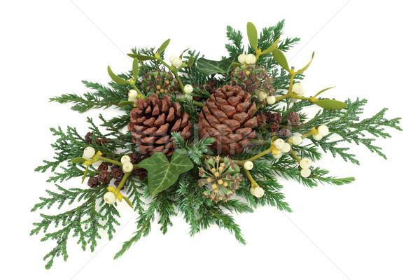 Tél növényzet dekoráció cédrus ciprus levél Stock fotó © marilyna