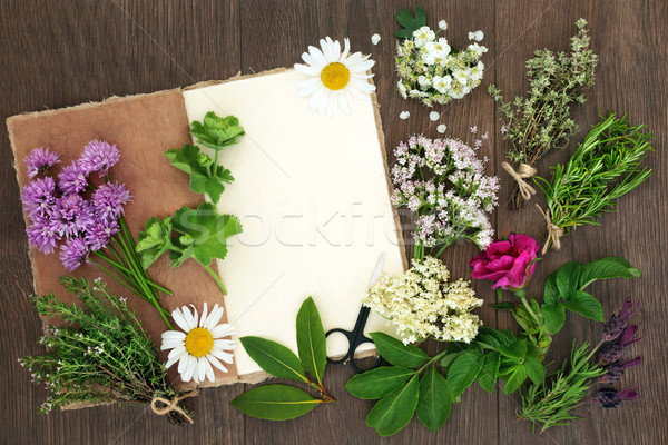 Herbs for Herbal Medicine Stock photo © marilyna