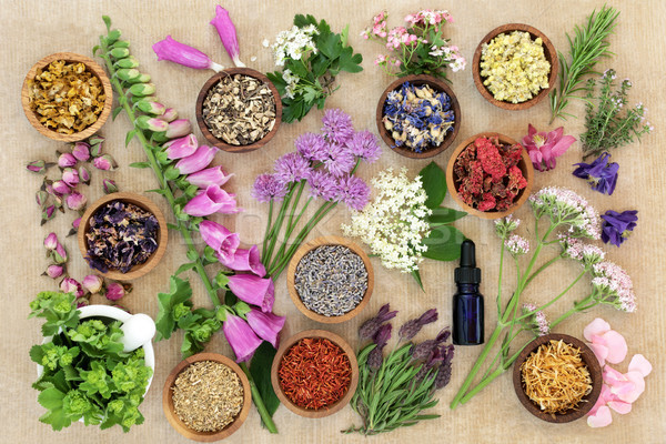 Medicinal Flowers and Herbs Stock photo © marilyna