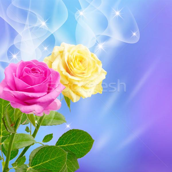 Rosa giallo rose fumo fiori primavera Foto d'archivio © Marisha