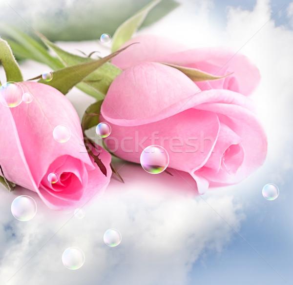 Rosa rose nubi tre primavera estate Foto d'archivio © Marisha
