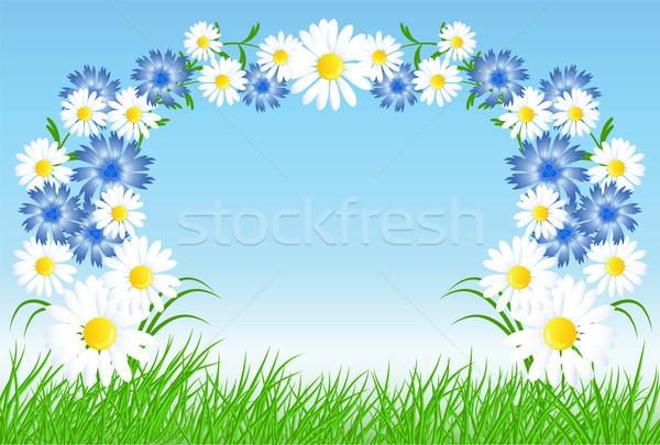 зеленая трава Blue Sky цветы весны природы искусства Сток-фото © Marisha