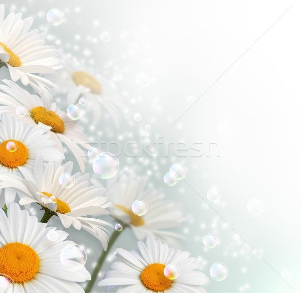Százszorszép kártya buborékok csillagok tavasz légy Stock fotó © Marisha