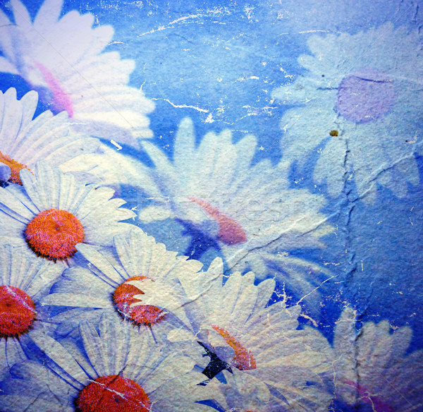 Old background with daisies Stock photo © Marisha