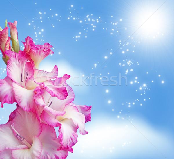 Fiore cielo fiore sole luce sfondo Foto d'archivio © Marisha
