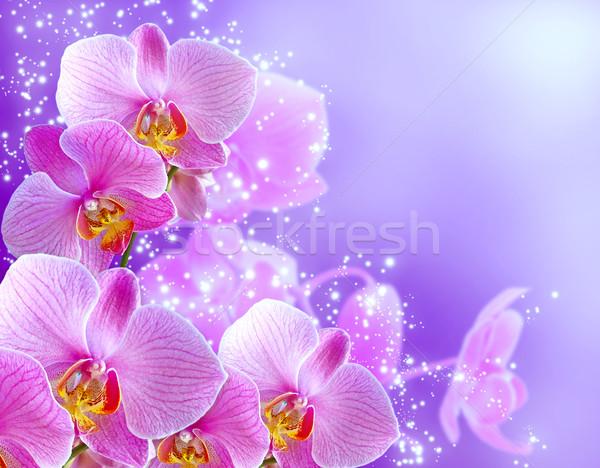 Orchid and stars Stock photo © Marisha