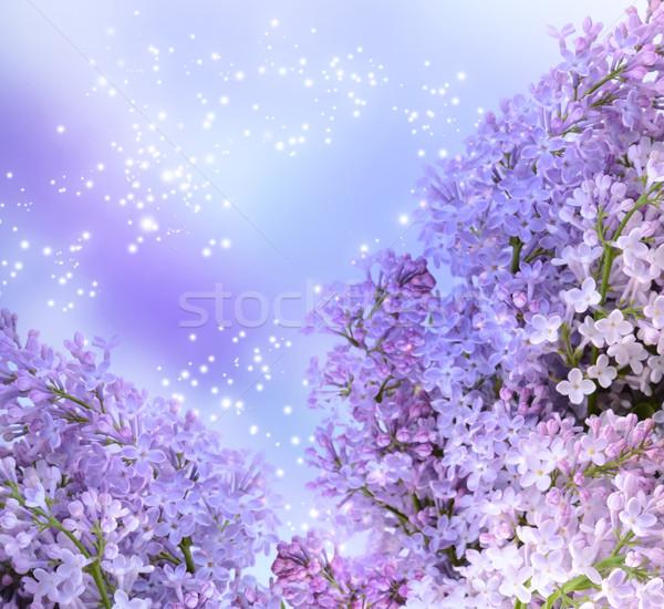 Fiore stelle fiore natura sfondo Foto d'archivio © Marisha