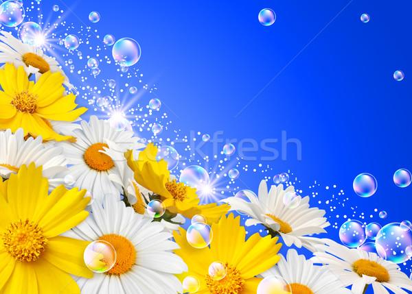 Flowers  Stock photo © Marisha