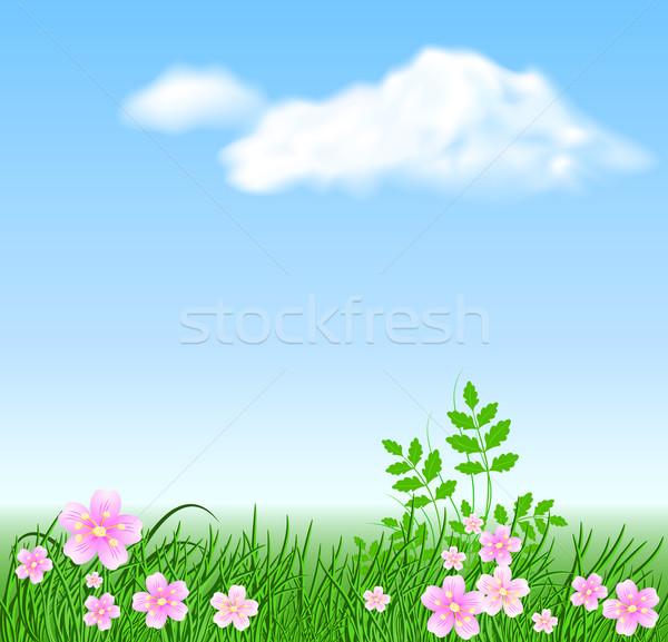 Meadow flowers on the sky background Stock photo © Marisha