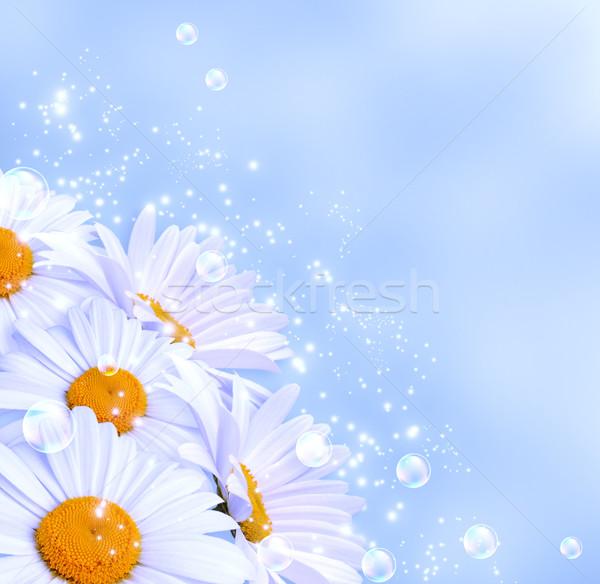 Százszorszépek égbolt buborékok virágok tavasz százszorszép Stock fotó © Marisha