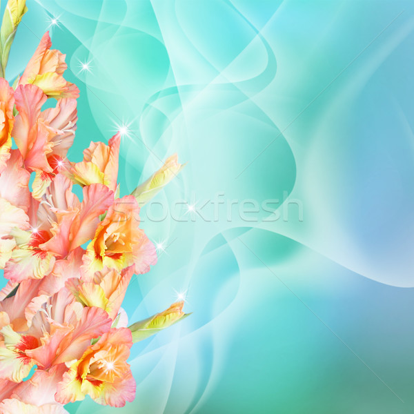 Gladiolus and stars Stock photo © Marisha
