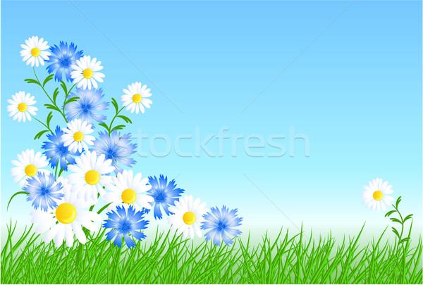 Cornflowers, camomiles with green grass Stock photo © Marisha