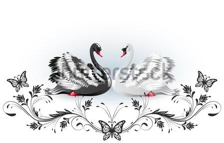 Fehér fekete hattyú rózsák elegáns ibolya Stock fotó © Marisha
