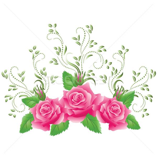 Pink roses Stock photo © Marisha