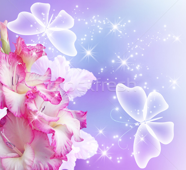 Gladiolus blossom and butterflies Stock photo © Marisha