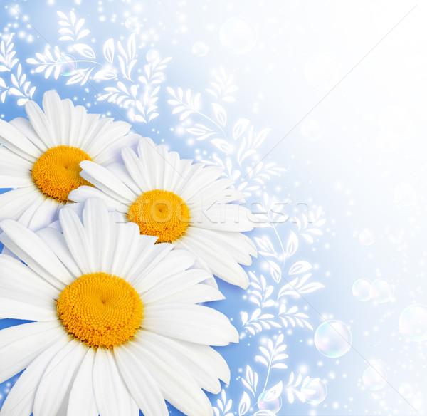 Papatya Yıldız çiçekler uçmak büyü güzel Stok fotoğraf © Marisha