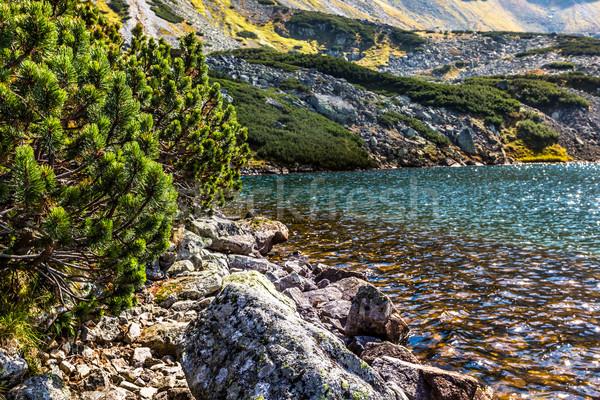 Górskich jezioro dolinie góry niebo trawy Zdjęcia stock © Mariusz_Prusaczyk