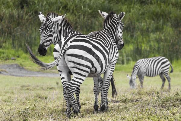 сохранение Танзания синий путешествия гор Сток-фото © Mariusz_Prusaczyk