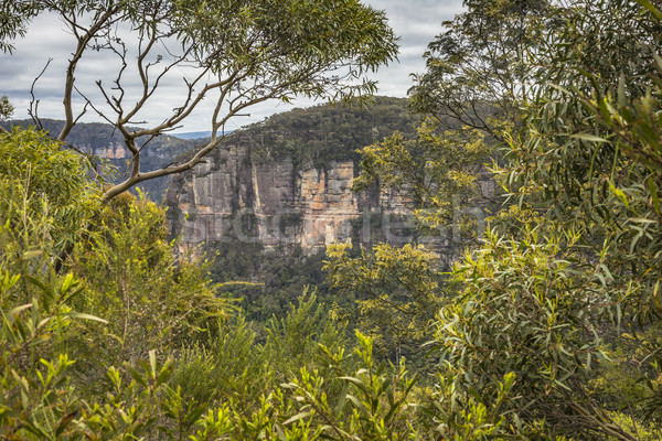 Blue Mountains in Australia  Stock photo © Mariusz_Prusaczyk